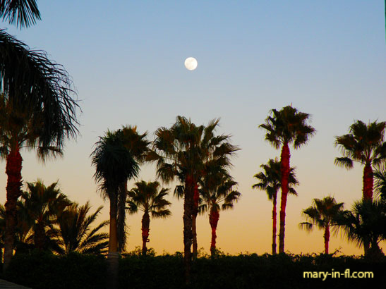 Moon rising over the palm trees